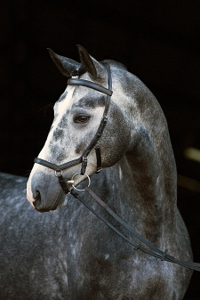 Rambo Micklem Competion Bridle, Cob/Small Horse, braun