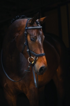 Rambo Micklem Diamante Competion Bridle, Cob/Small Horse, schwarz